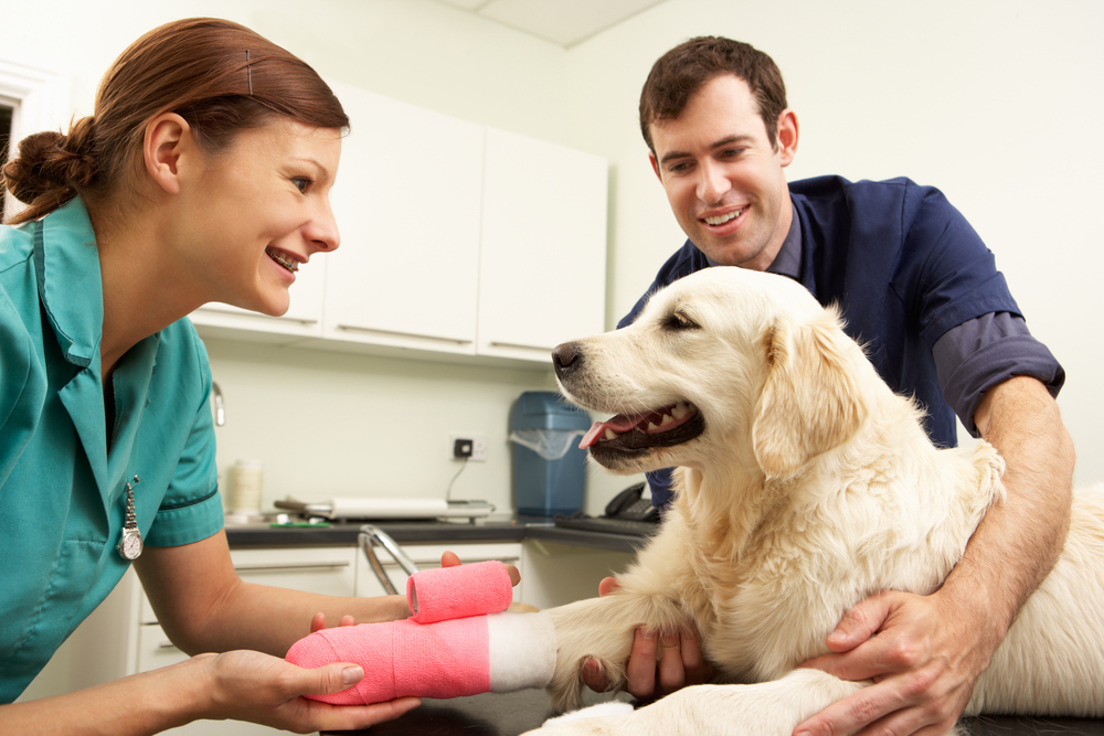 pet insurance protects your furry friends in a health emergency