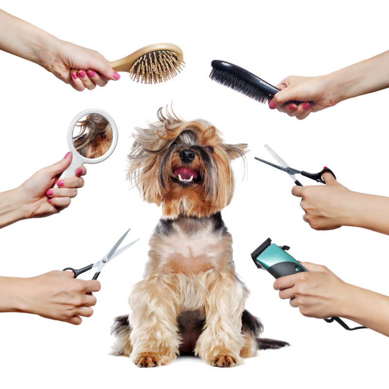 unfortunately, pet insurance doesn't cover routine care like grooming